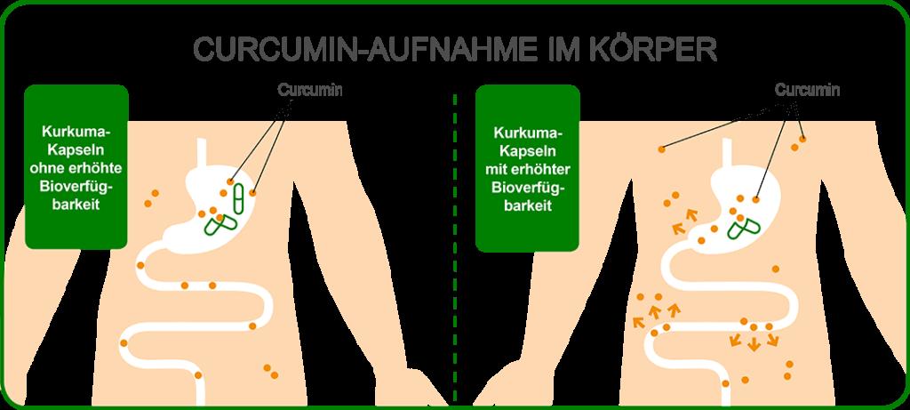 Grafik zur Aufnahme von Curcumin im Körper mit erhöhter Bioverfügbarkeit