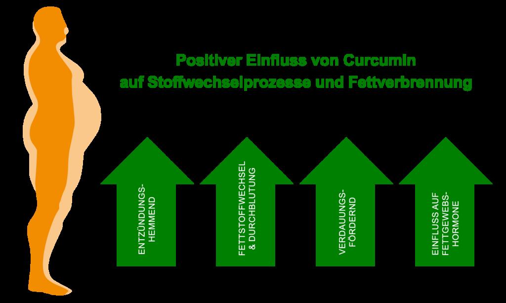 Positiver Einfluss von Curcumin auf Stoffwechsel und Fettverbrennung